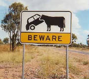 beware-of-the-cow-sign.jpg